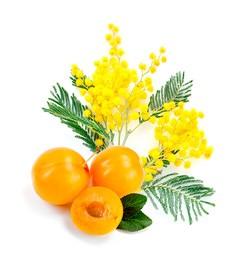 Blooming Mimosa
