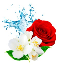 Jasmine and Rose Water