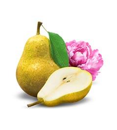 Pear Peony